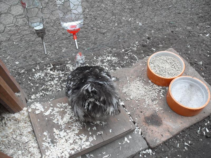 pebbles tries the water bottle