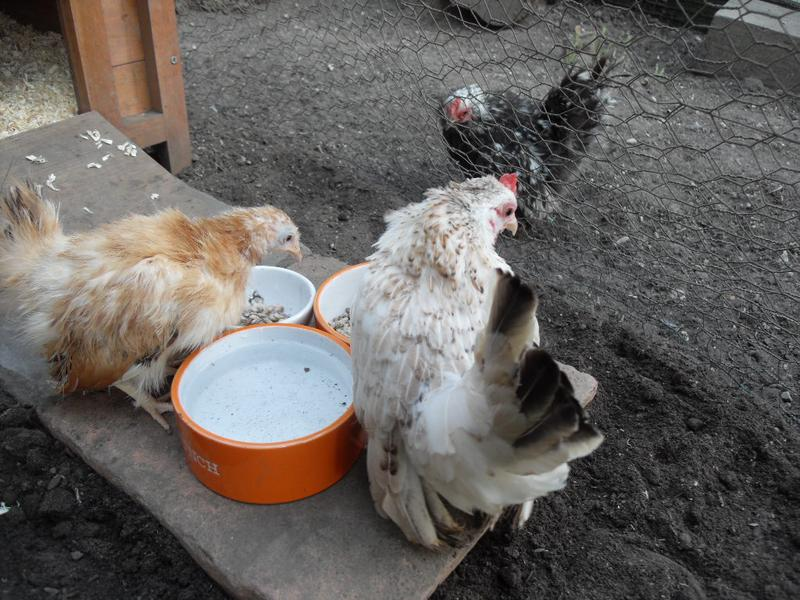 They investigate the feeding station