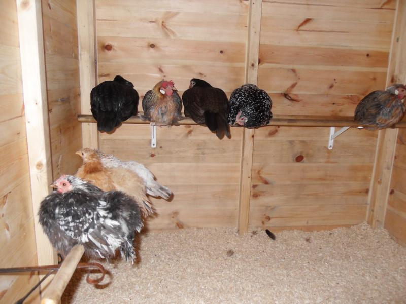 Last night's photo showing the back perch